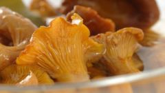 Как приготовить вкусные маринованные лисички