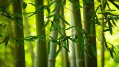 Ткань из бамбука. Правила ухода