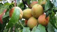 Как приготовить персиковое варенье на зиму за 10 минут