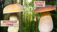 Как отличить ядовитые сорта грибов