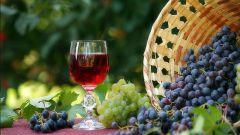 Быстрое и вкусное вино из винограда