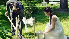 Распространенные свадебные обычаи
