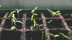 Когда сажать перцы, огурцы и помидоры на рассаду в 2017 году
