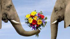 Как правильно дарить цветы любимой женщине