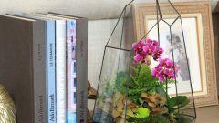 Как выбрать растения  для флорариума