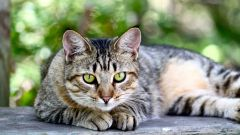 Какие растения помогают лечить домашних животных