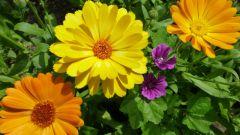 Какие цветы можно сажать под зиму
