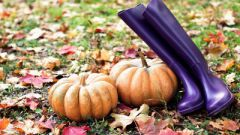 Какие работы проводят в ноябре на огороде
