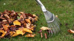 Какие работы проводят в ноябре в саду