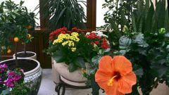 Какие цветущие комнатные растения самые неприхотливые