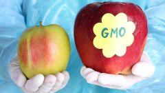 Генномодифицированные продукты: вред или польза?
