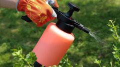 Как бороться с вредителями и болезнями в саду осенью