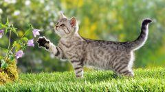 Что влияет на характер кошек