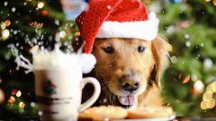 Как встречать год Желтой Собаки