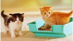 Как легко приучить котенка к лотку