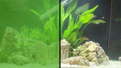 Что делать, если зеленеет вода в аквариуме