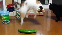 Действительно ли коты боятся огурцов