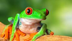 Чем отличается лягушка от жабы