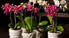 Как осуществлять уход за орхидеей в домашних условиях