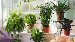 Какие растения нельзя держать дома