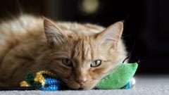 Как выбрать хорошие игрушки для кошек
