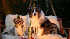Как надо встречать год Собаки