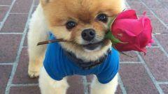 Какие породы собак самые милые