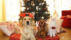 Как нарядить собаку на Новый год