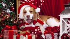 Как привлечь Желтую Земляную Собаку в 2018 году