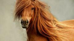 Чем отличается шампунь для лошадей от обычного