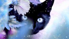 К чему снятся кошки: самое популярное толкование