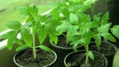 Как сажать растения в марте по Лунному календарю