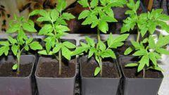 6 советов по выращиванию рассады