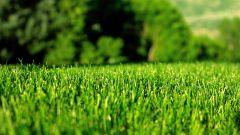 Как самостоятельно вырастить идеальный газон