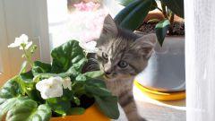 Как отучить кошку лазить в горшки с цветами