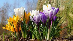 Как сажать растения в апреле по Лунному календарю