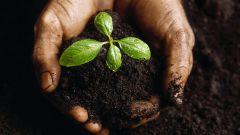 Как экономно можно удобрить землю