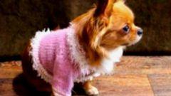 Как связать кофту для собаки