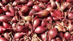 Когда сажать лук-севок весной
