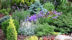 Какие растения нельзя сажать на даче