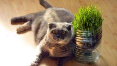 Какая трава нужна кошкам