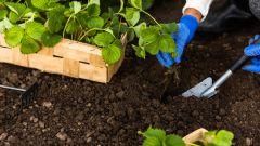 Как подкормить растения весной