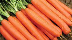 Когда сажать морковь на еду и на хранение