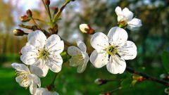 Как сажать растения в мае по Лунному календарю