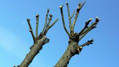 Зачем нужна обрезка садовых деревьев