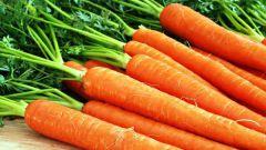 Какие сорта моркови самые сладкие