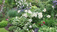 Весенняя очистка цветочной клумбы