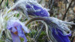 Весенние возвратные заморозки, их влияние на растения и действия садоводов