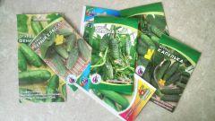 Как сажать огурцы семенами в грунт