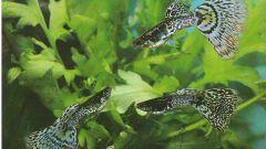 Как обустроить пестрый мир аквариума